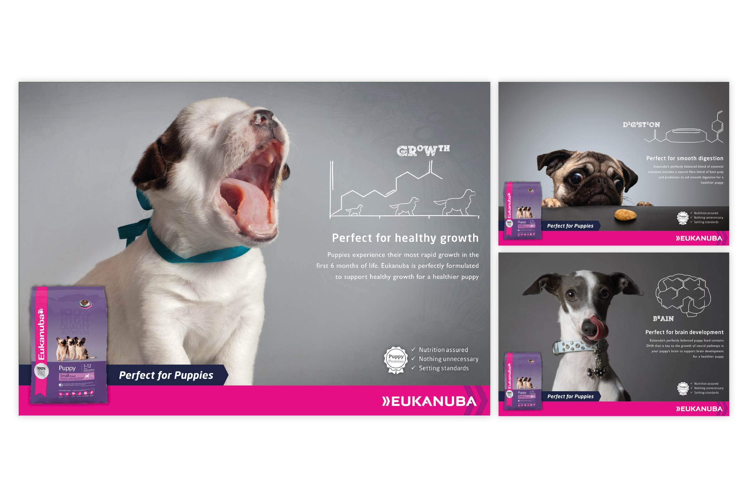 Eukanuba Campaign – Pitch