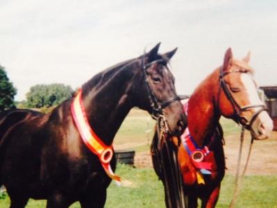 horse-shut-eyes.jpg