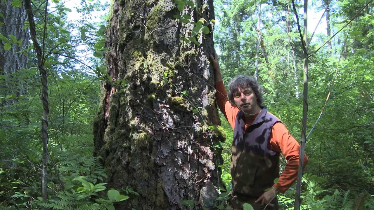 Richard Boyce's documentary  Rainforest  raises a protest against rampant industrial logging on Vancouver Island