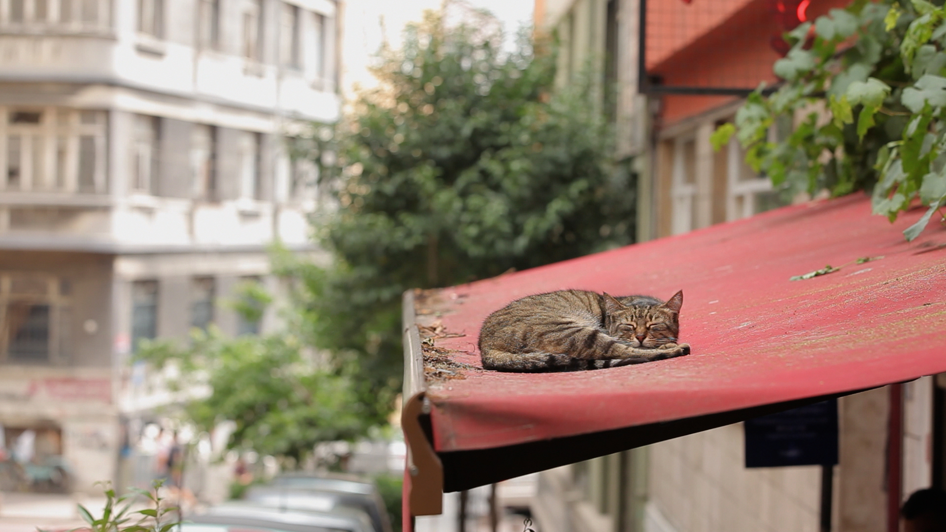 Cat napping in Ceyda Torun's  Kedi.
