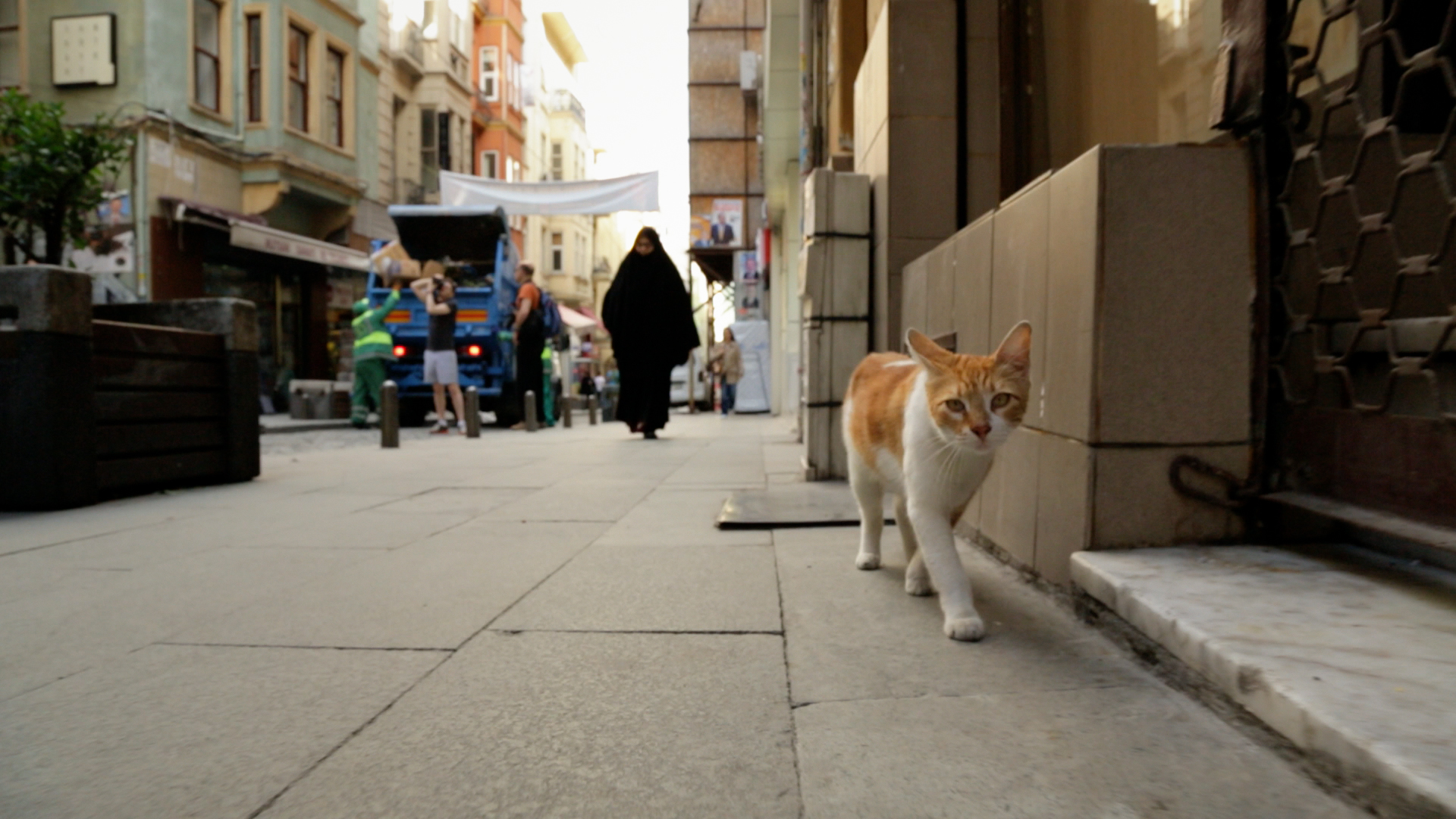 A street cat makes the rounds in  Kedi.