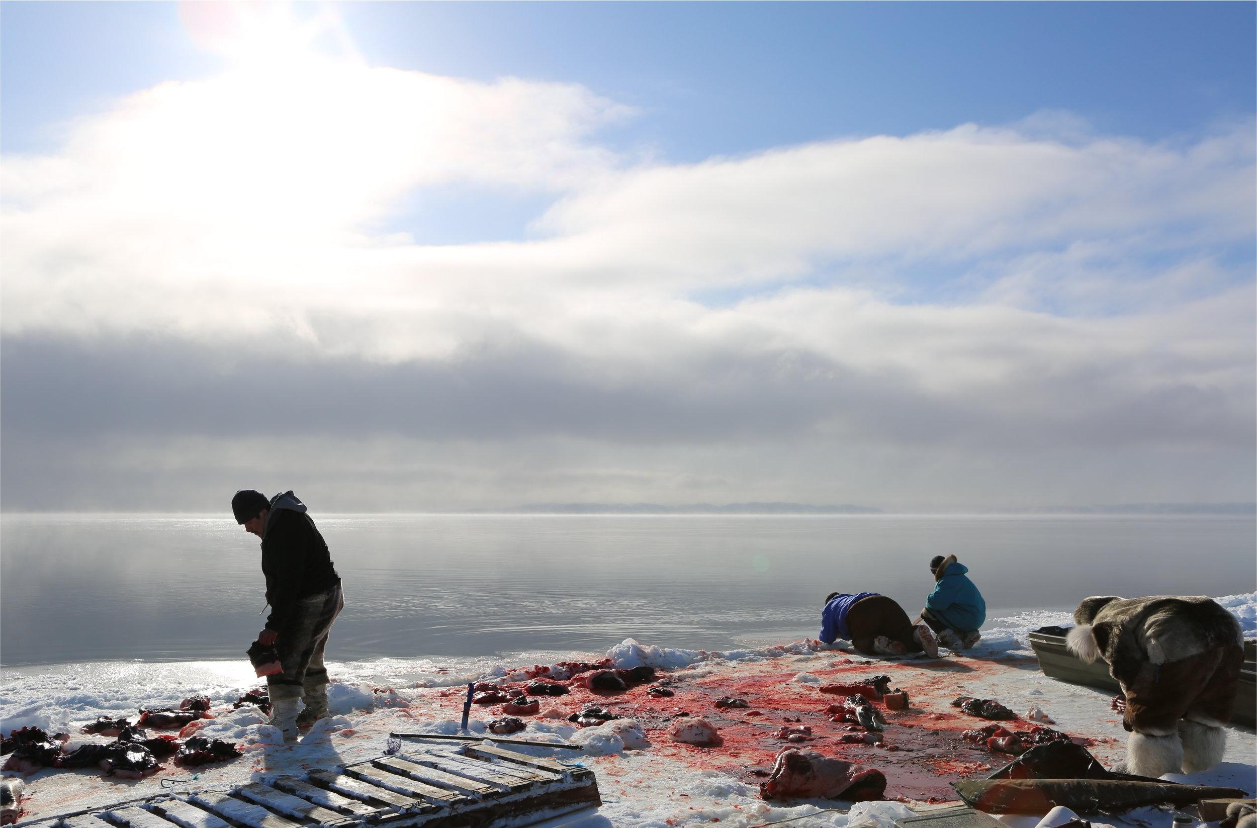 Angry Inuk: Isuatuq, Joannie and Perry Ikkidluak butchering bearded seal.