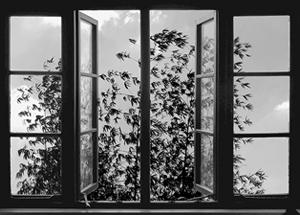Abbas Kiarostami's  24 Frames