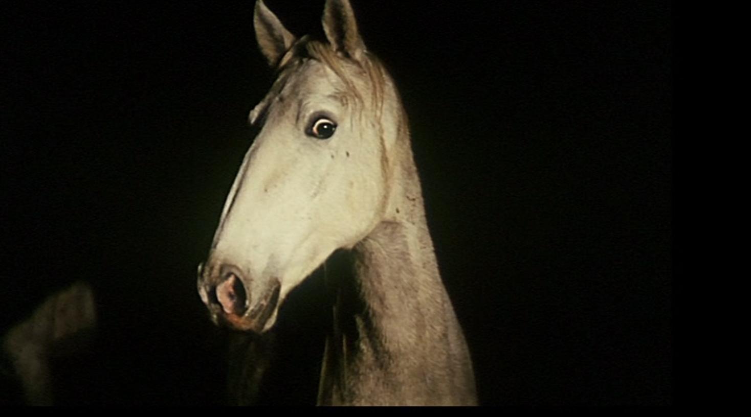 Elegy  (1965)