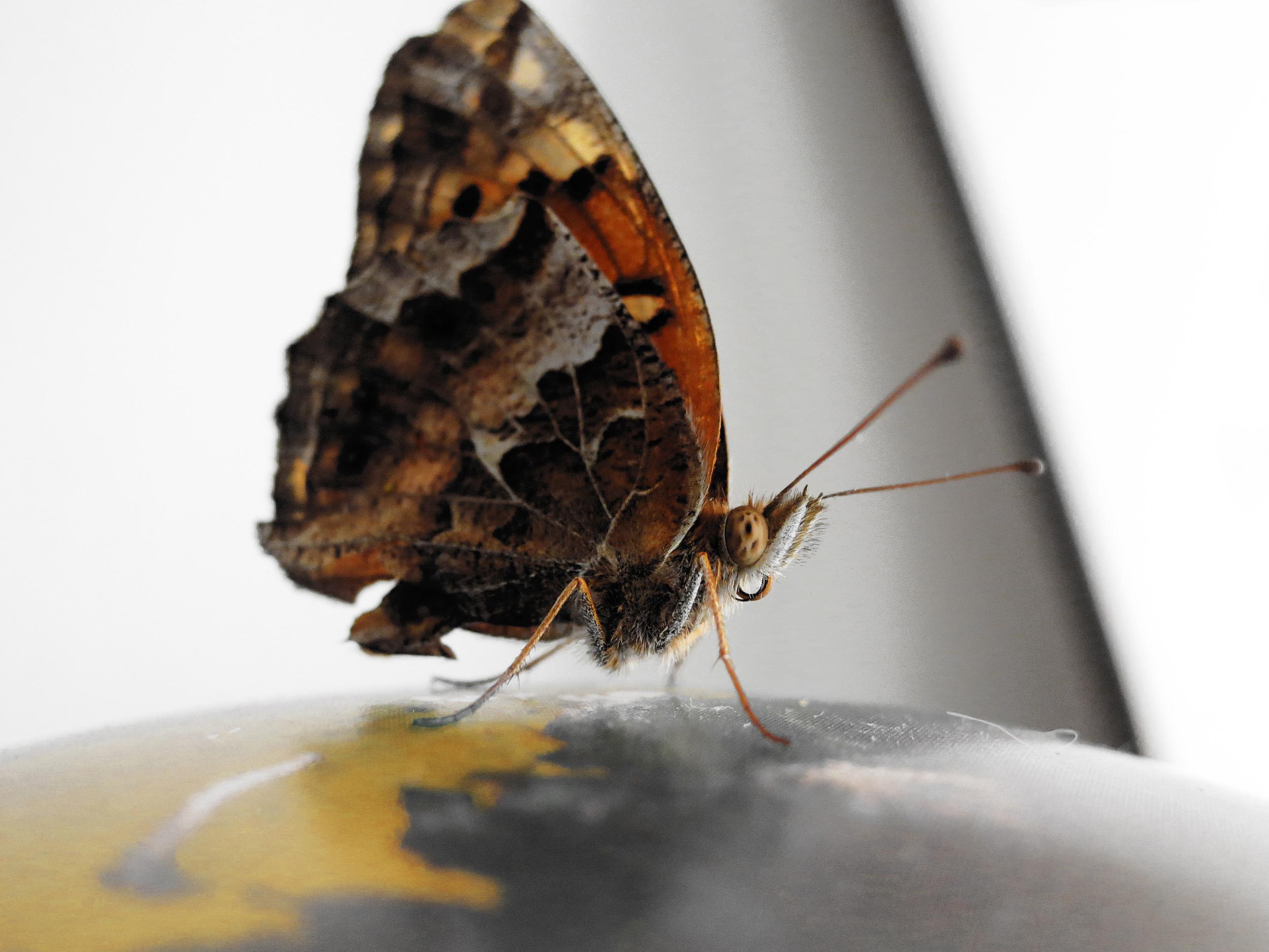 mothy moth.jpg