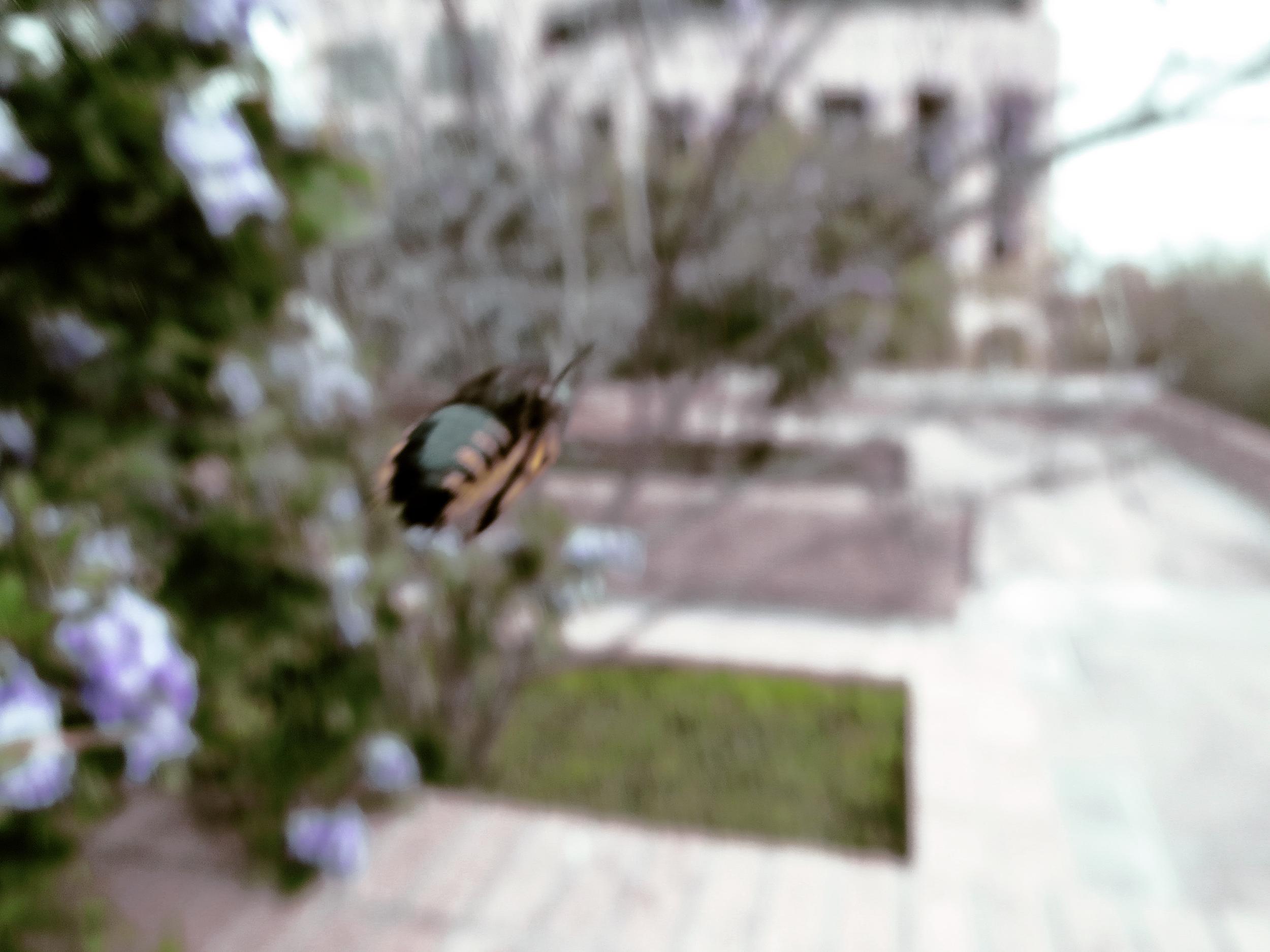 flight of a bumble bee.jpg