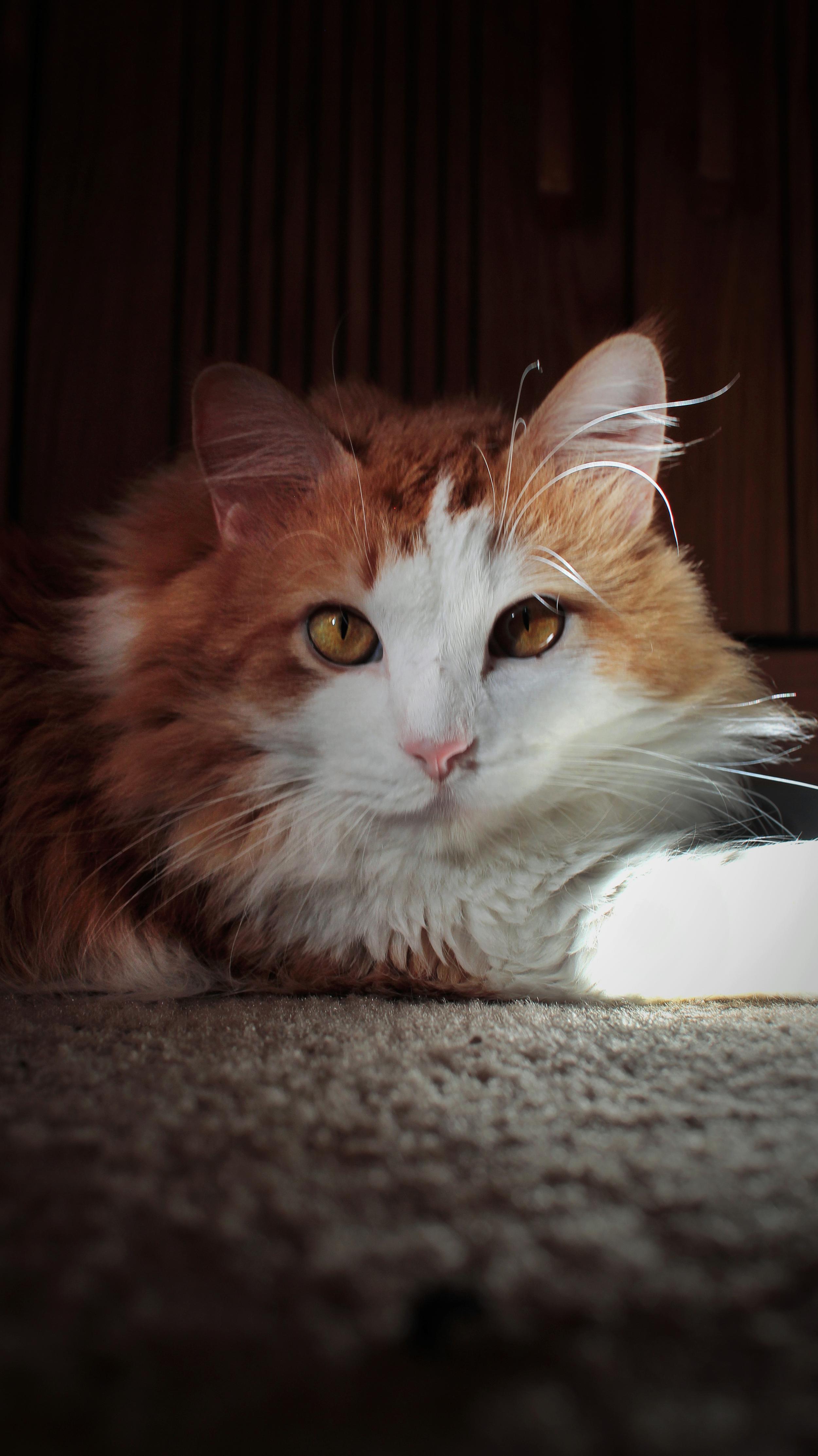 zee cat.jpg