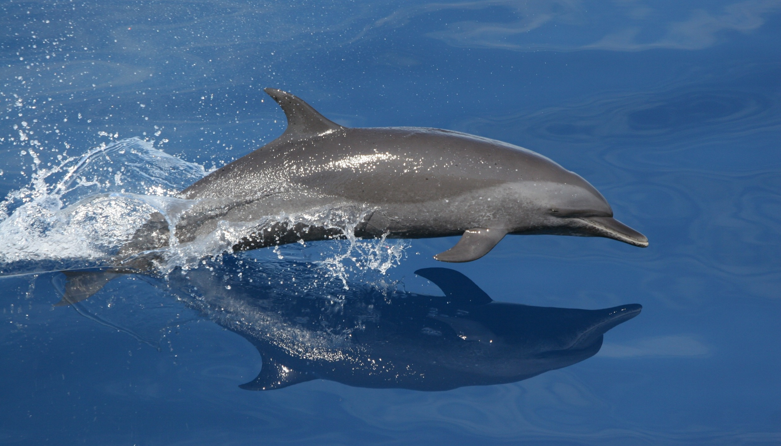 free from search on dolphin photos free
