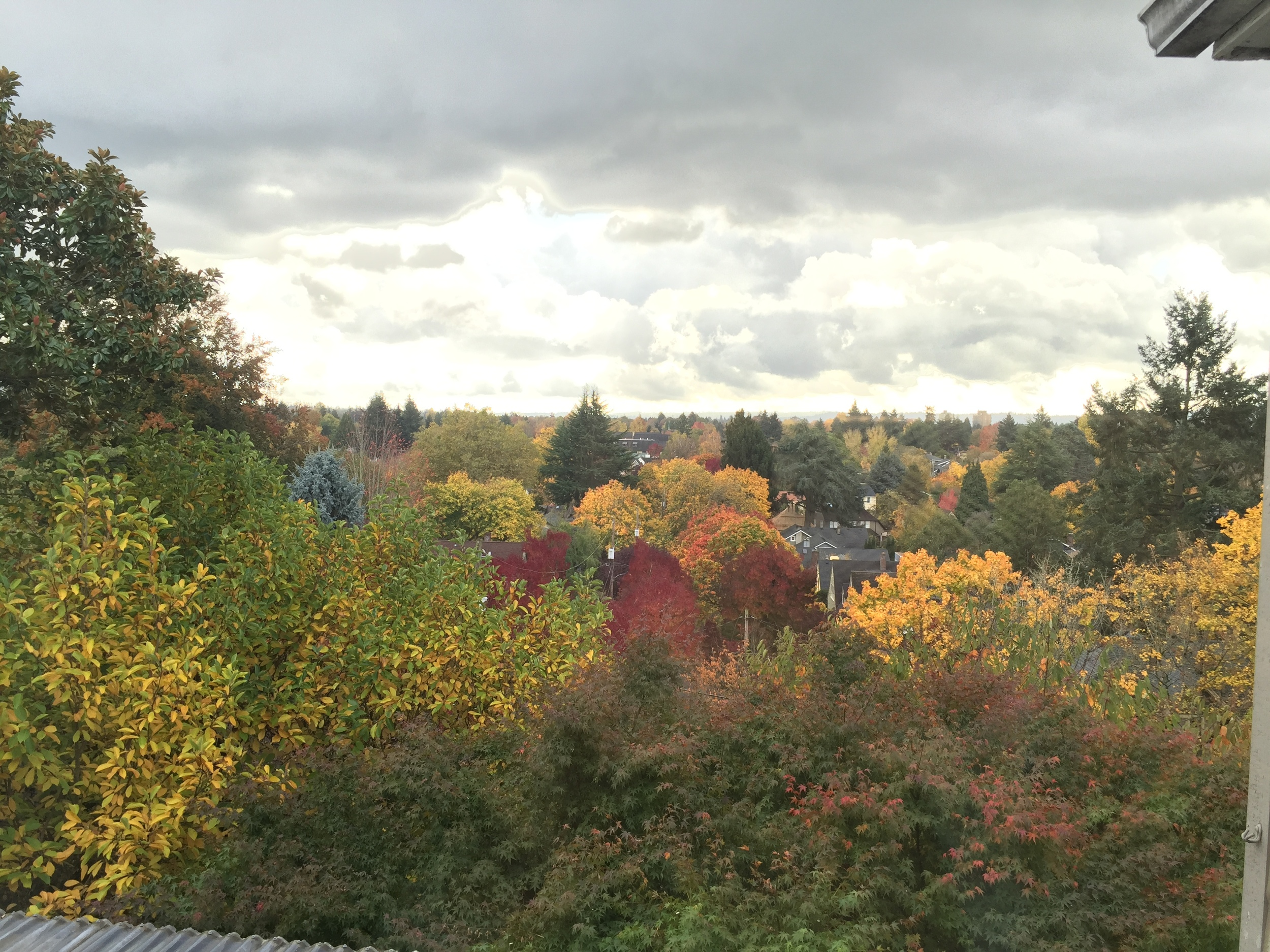One of the first things that I notice in a home is always the view. This home on the Alameda Ridge in NE Portland had fantastic views of Portland, and the fall colors just added to the view.