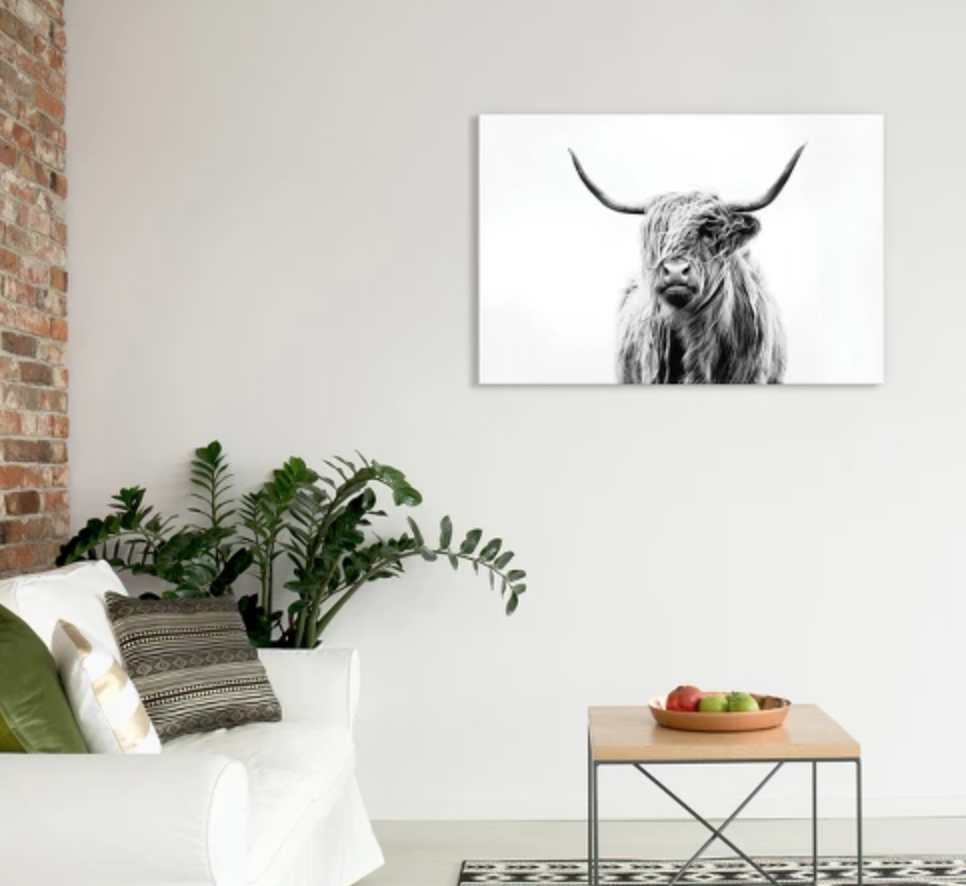 Portrait of a Highland Cow - $74.99