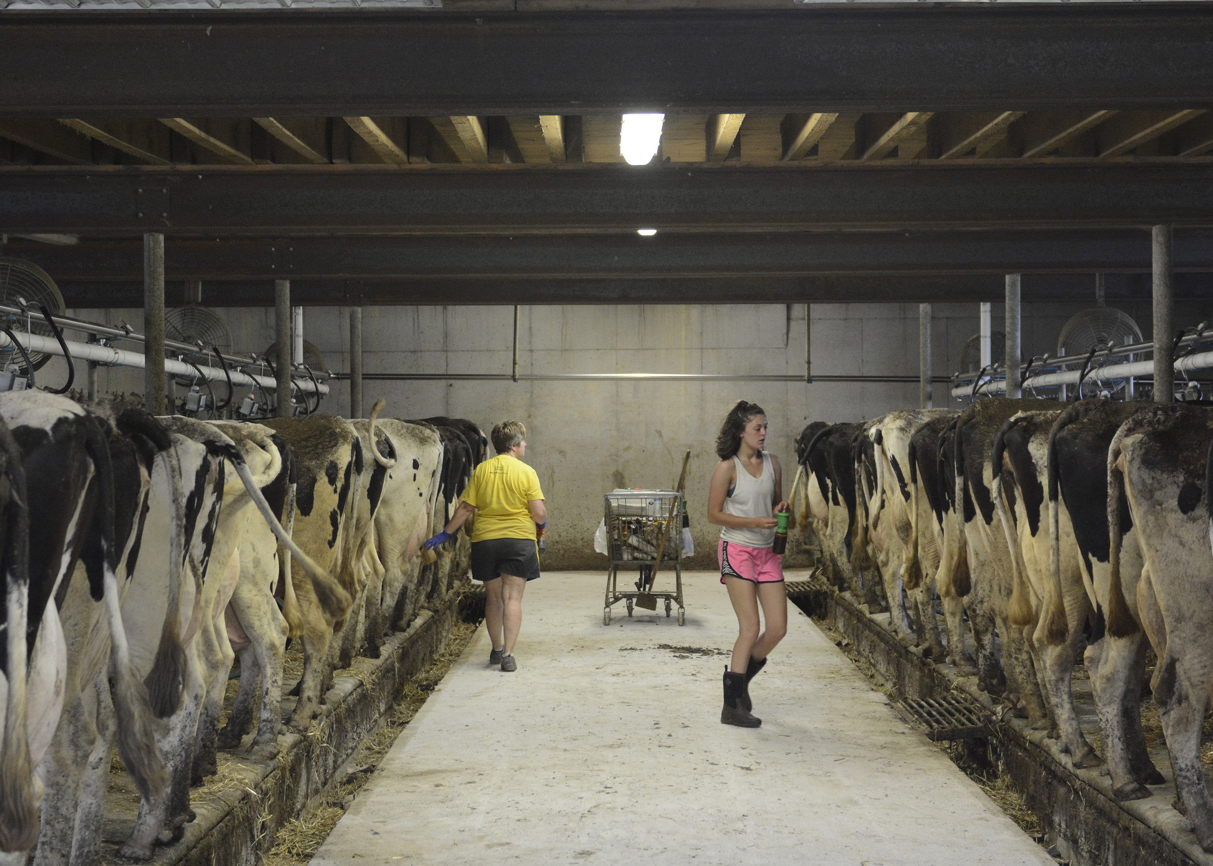 """Sherrie (left) and Morgan Krick go through the duties that come with milking. The Krick's have enough cows to go through two """"shifts"""" of dairy cows that get milked."""