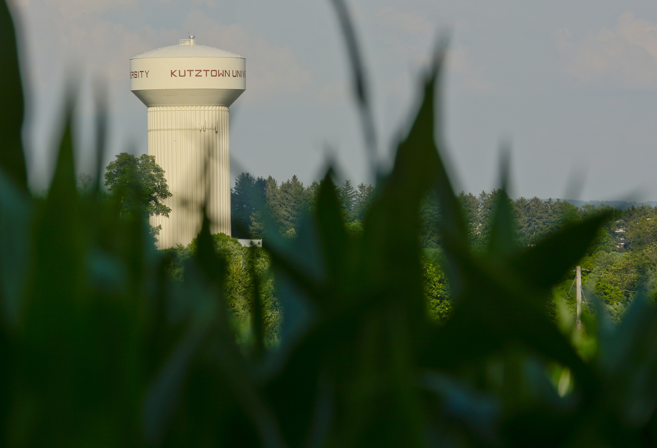 The Kutztown University water tower is visible from one of the Angstadt's cornfields.