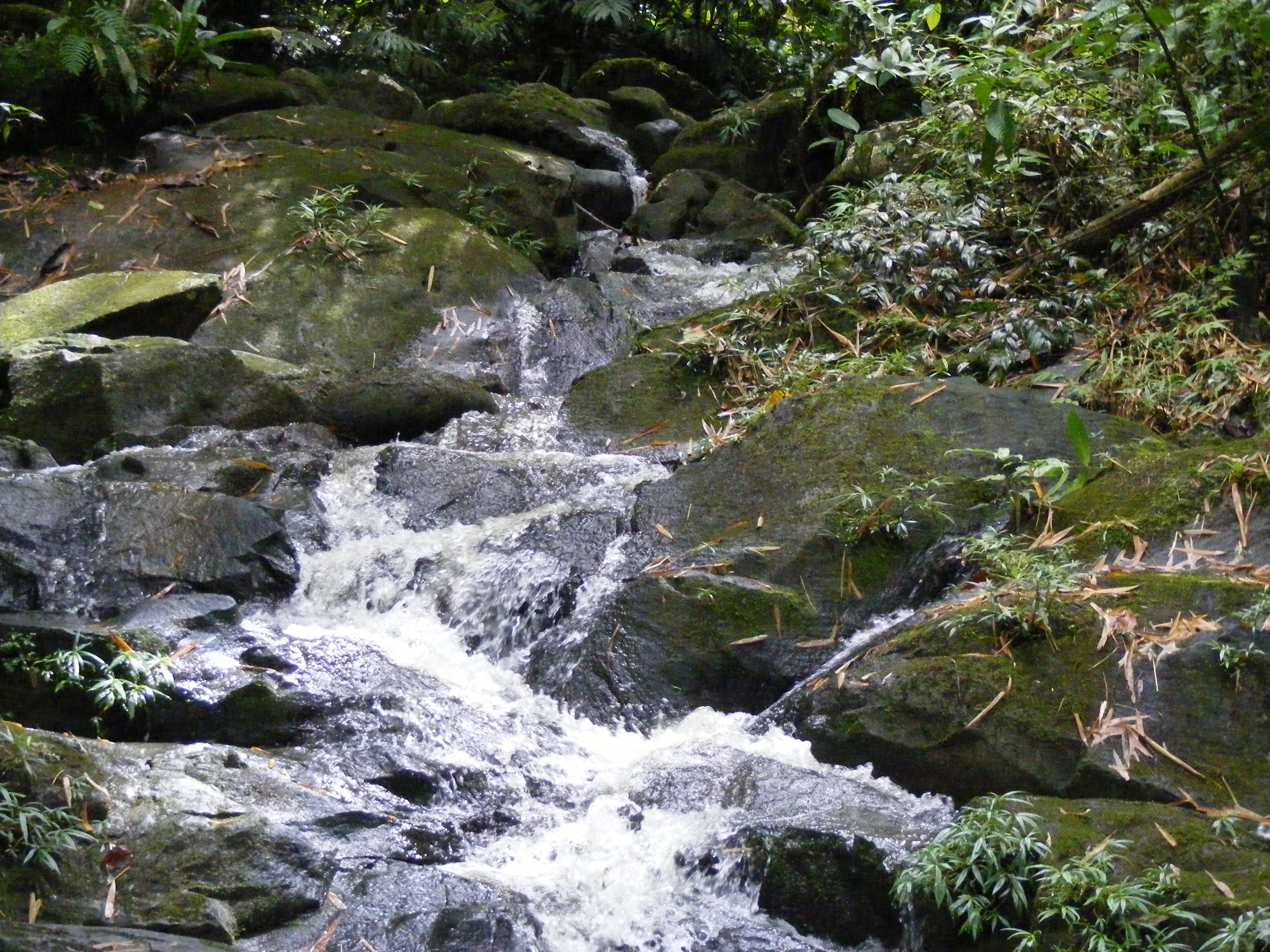 puerto-rico-mountain-rain-forest-wild-stream-water-1418009-pxhere.com.jpg