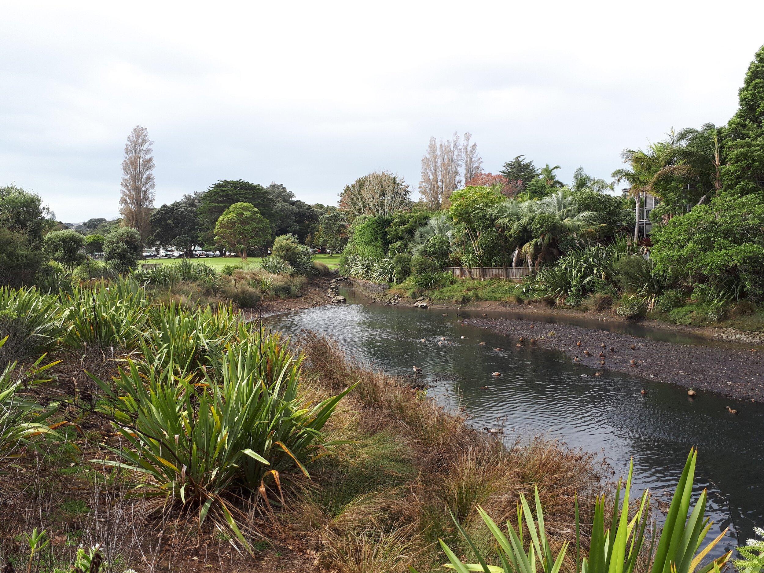 Martyn Wilson urban stream riparian restoration