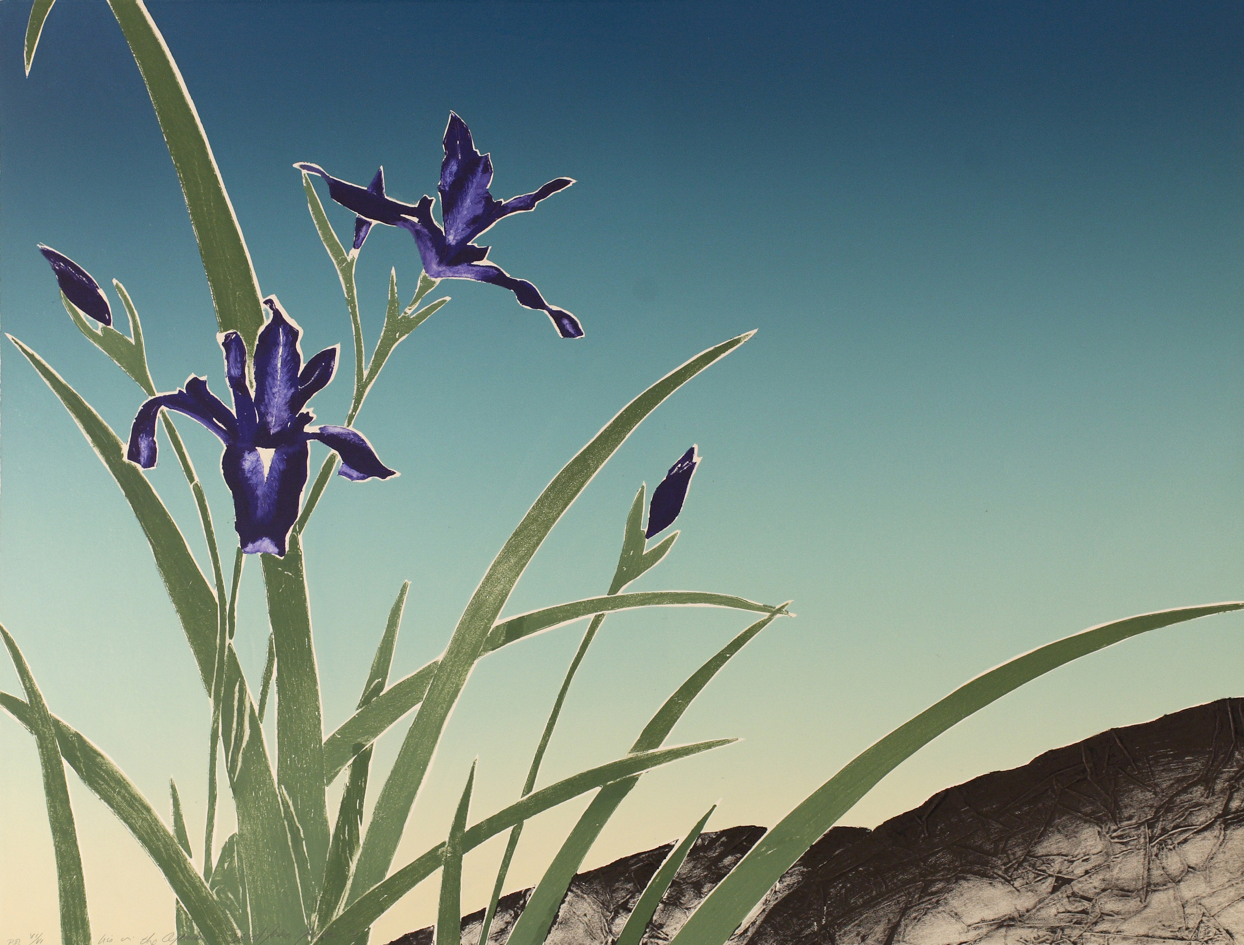 Iris in the Afternoon-29X22.jpg