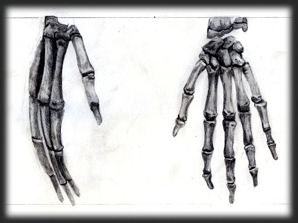 Bones Study