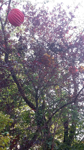 Tree-as-Smart-Object-1.jpg