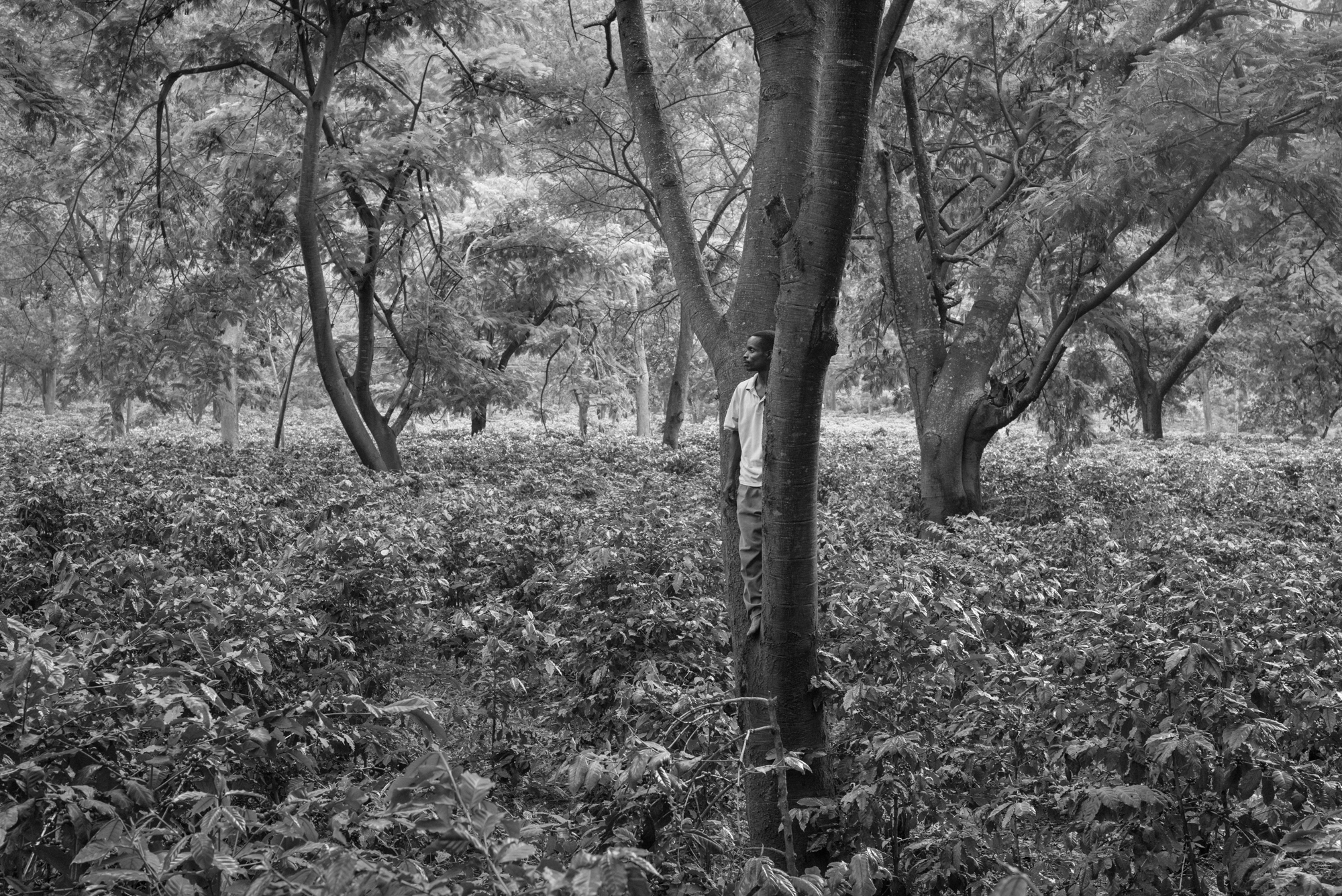 Coffee Fields, Tanzania,  2015