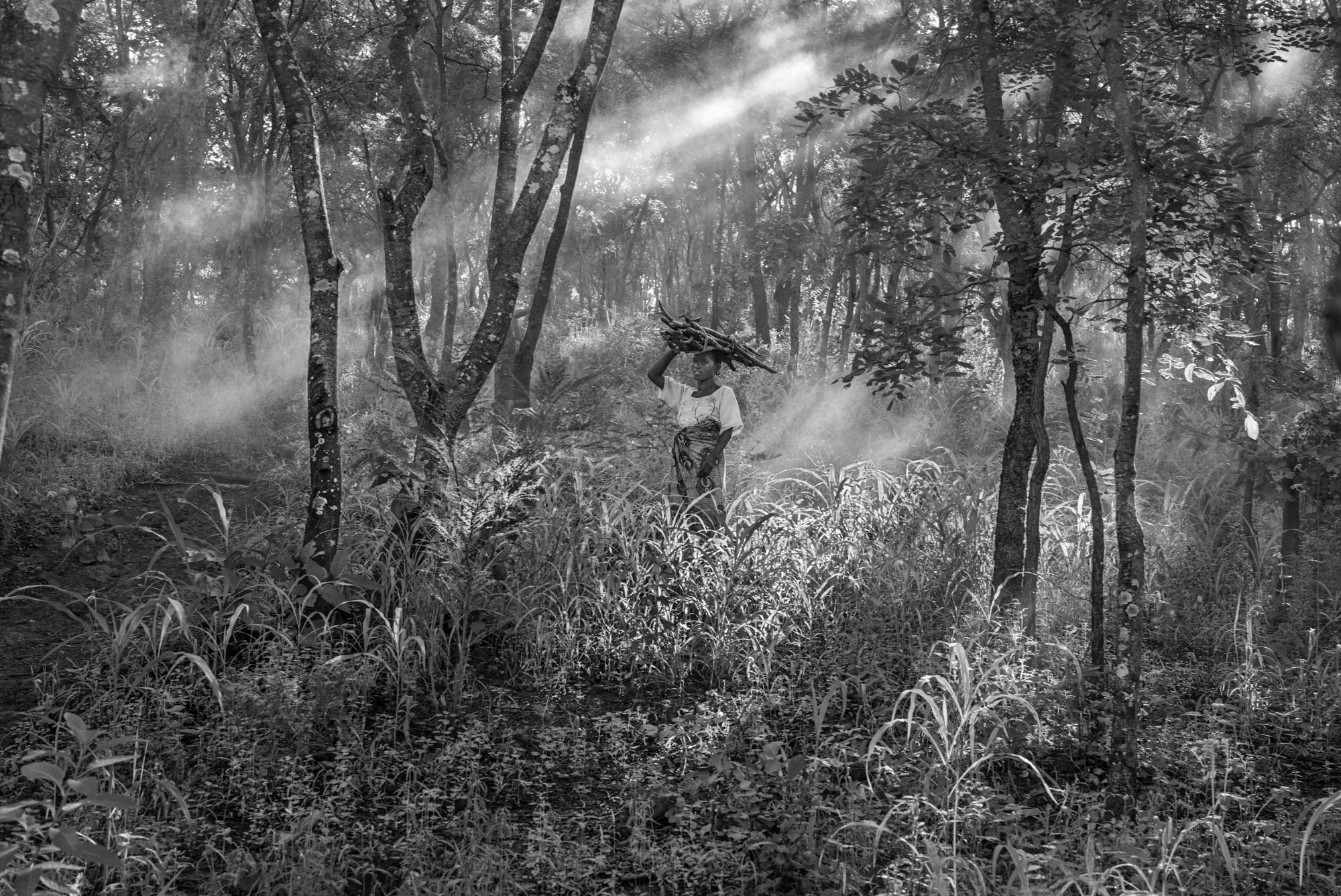 Firewood, Tanzania,  2015