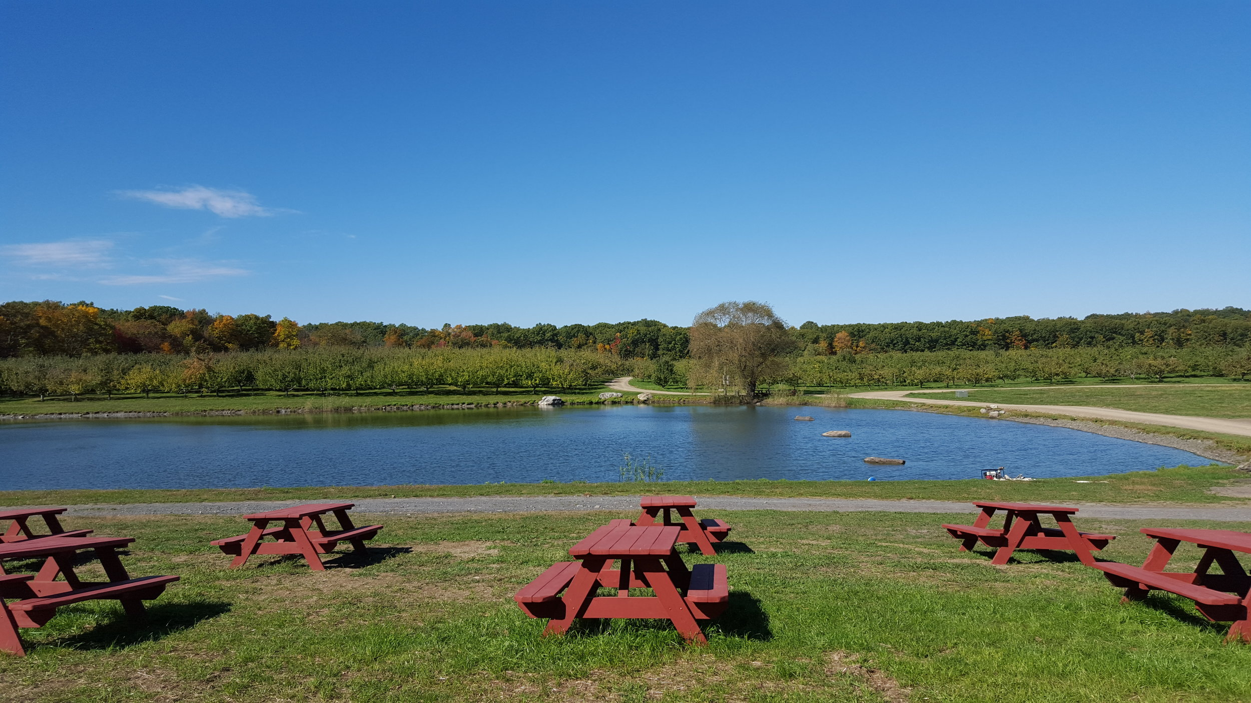 Twin Star Orchards Picnic Tables & Pond.jpg