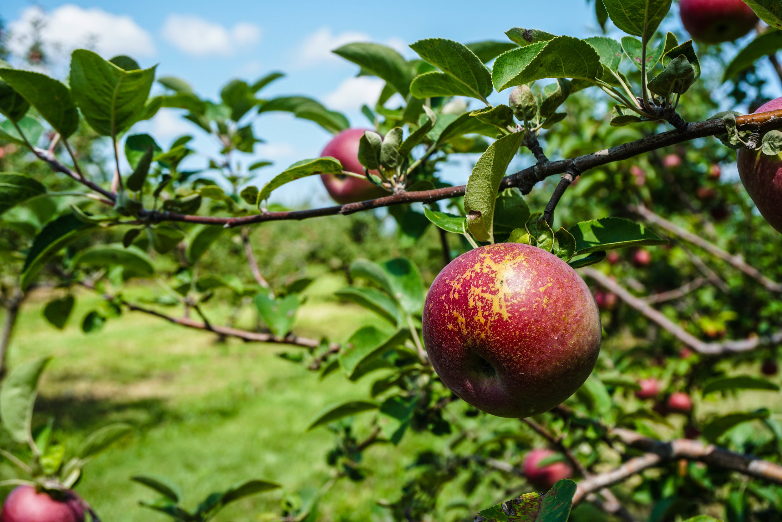 2017_08_28_BCH_New_Paltz_Orchard_009.jpg