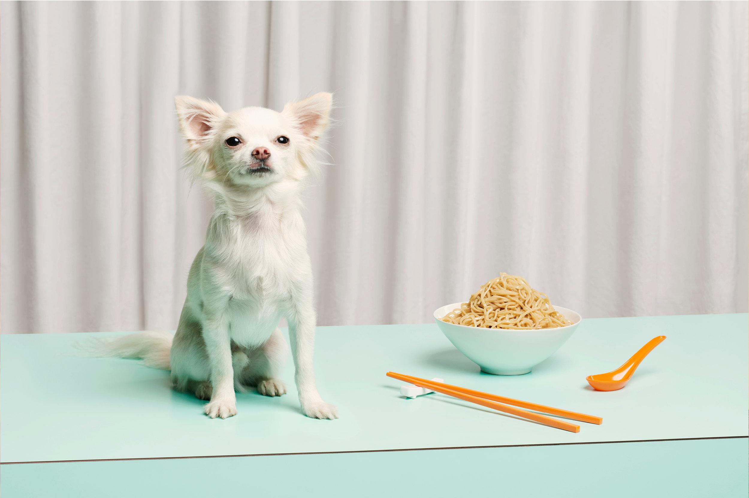 """Dog Calendar 2018/The Gourmand    """"A Dog Called Noodle""""    Jess Bonham"""