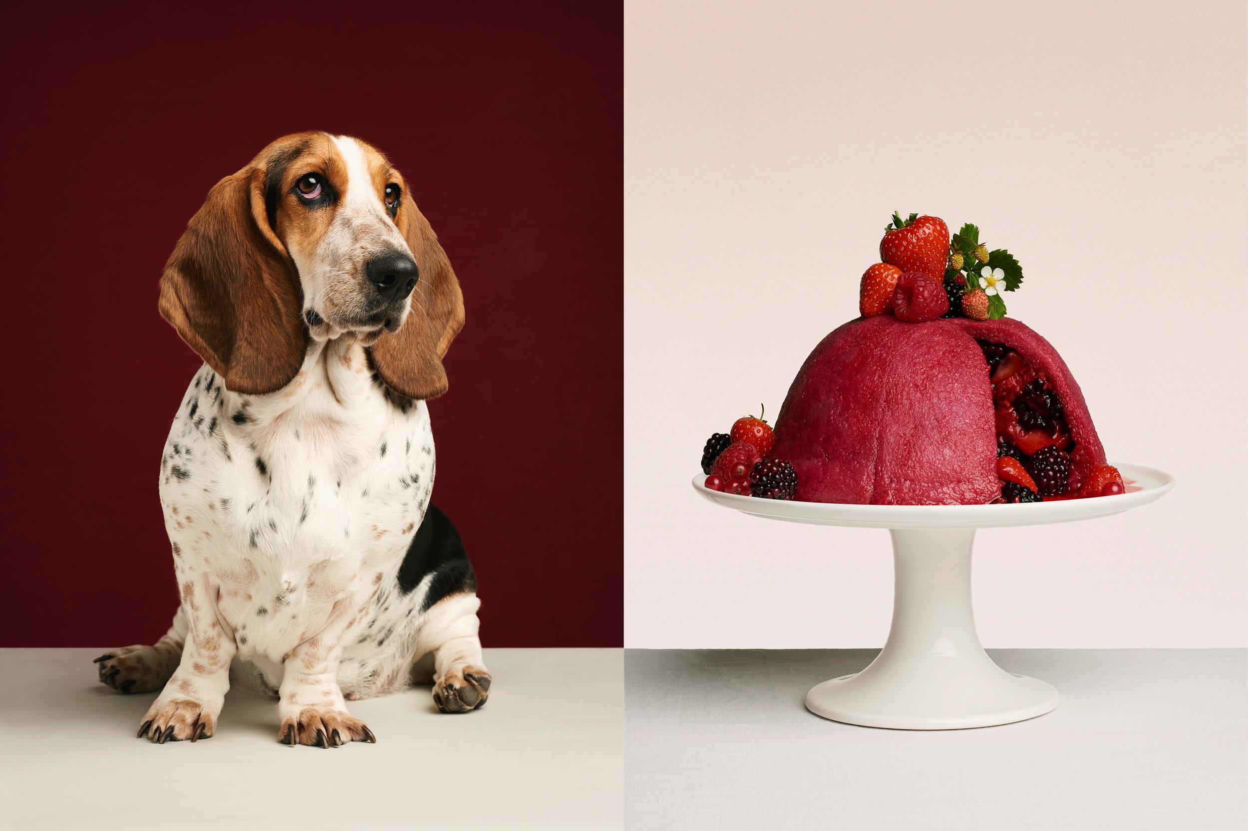 """Dog Calendar 2018/ The Gourmand    """"A Dog Called Pudding""""    Jess Bonham"""