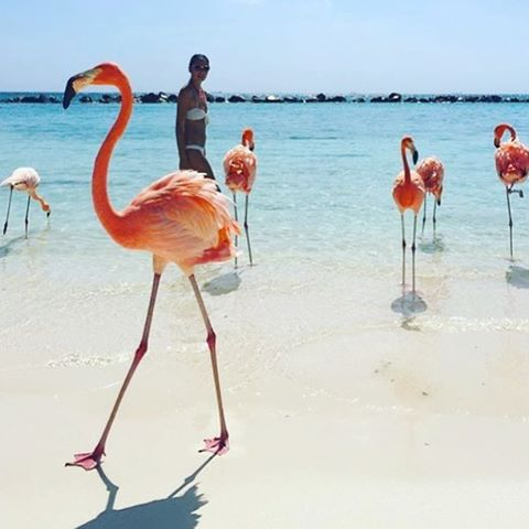 Aruba on the mind today! This photo by @backpackerstory looks enchanting! #Aruba #oranjestad #flamingo #beachlife