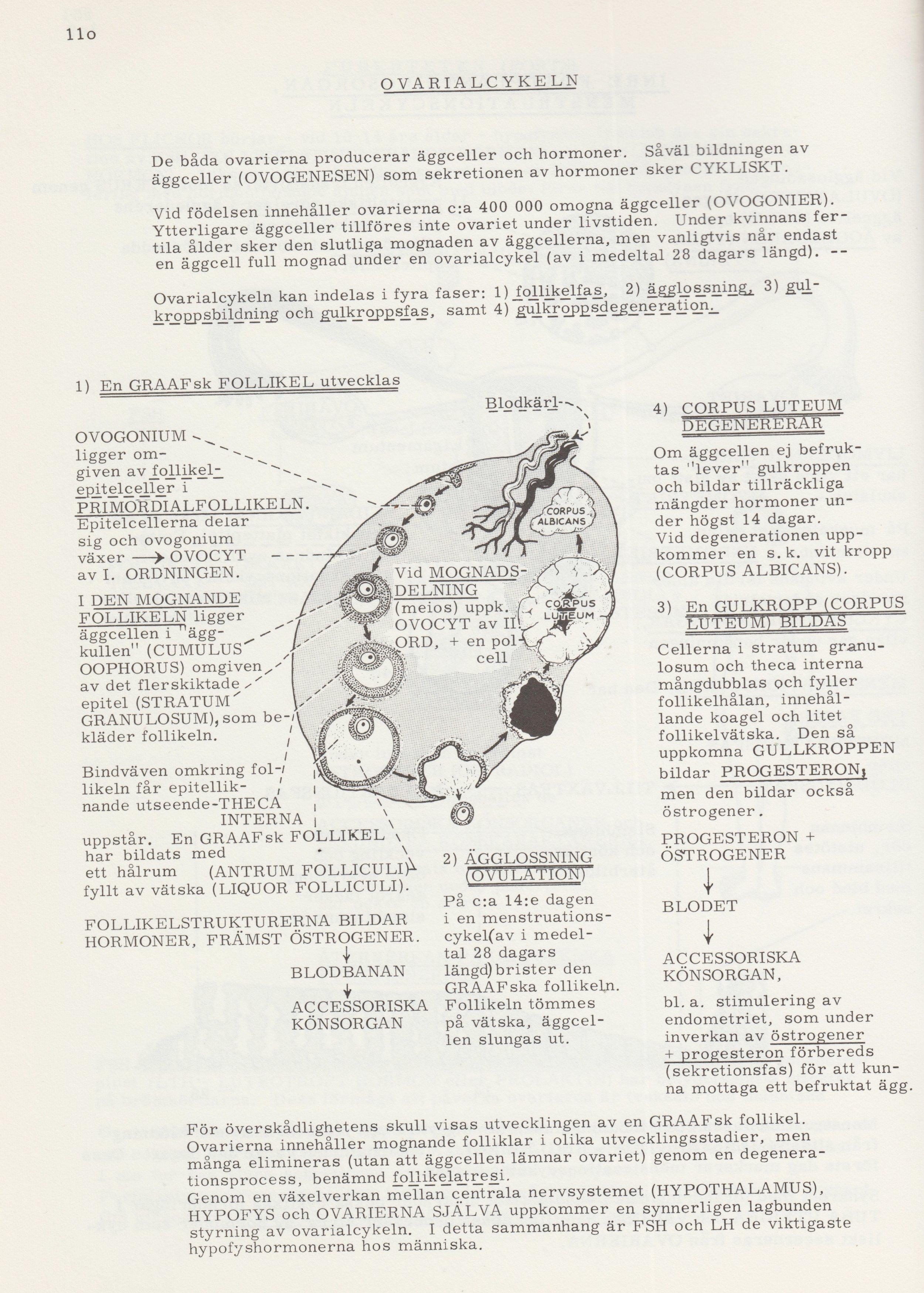 RÁNDOTTIR Ovarialcykeln.jpg