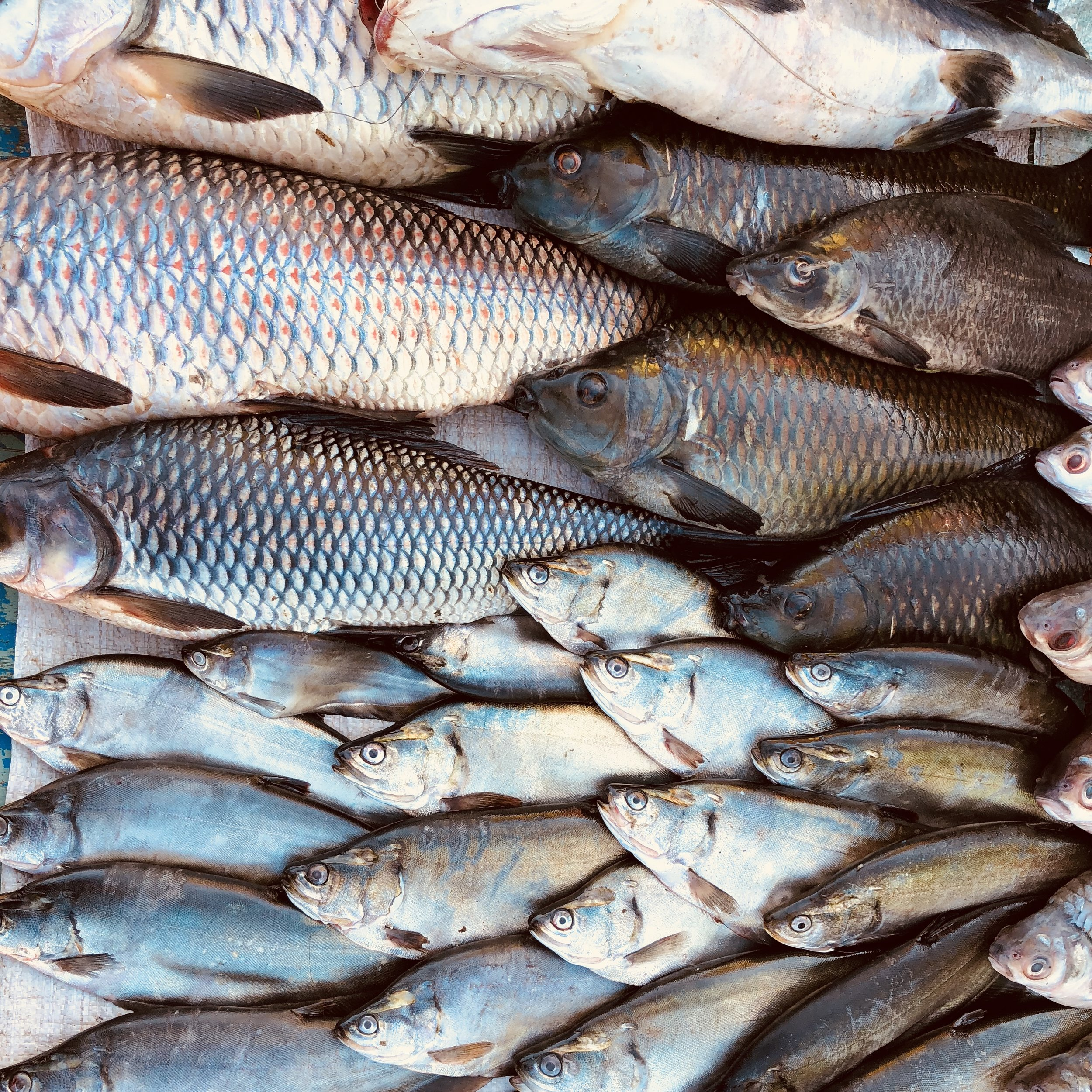 Lake Indawgyi fuels the local fish markets