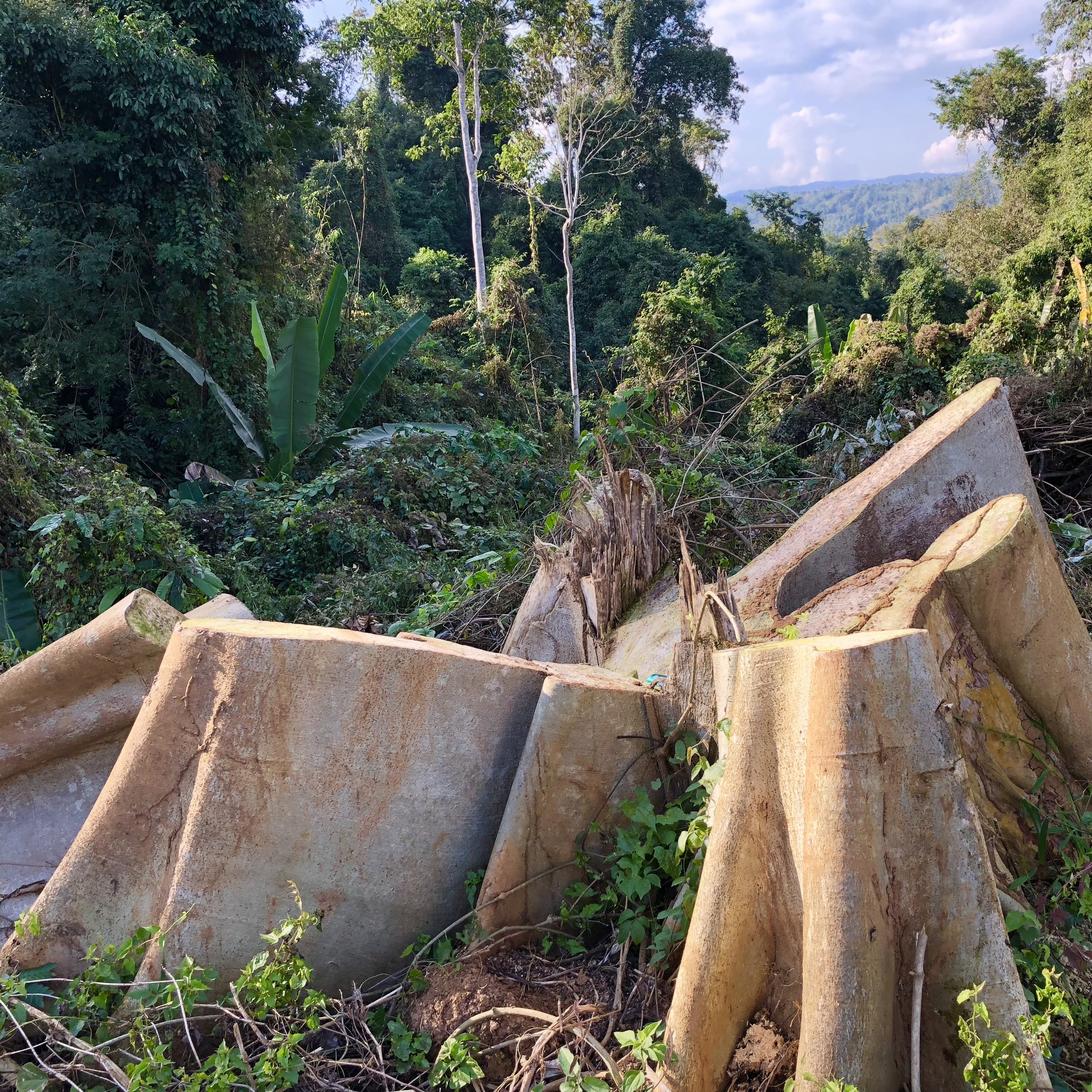 Environmental vandalism abounds within the Shwe Taung mountain forest
