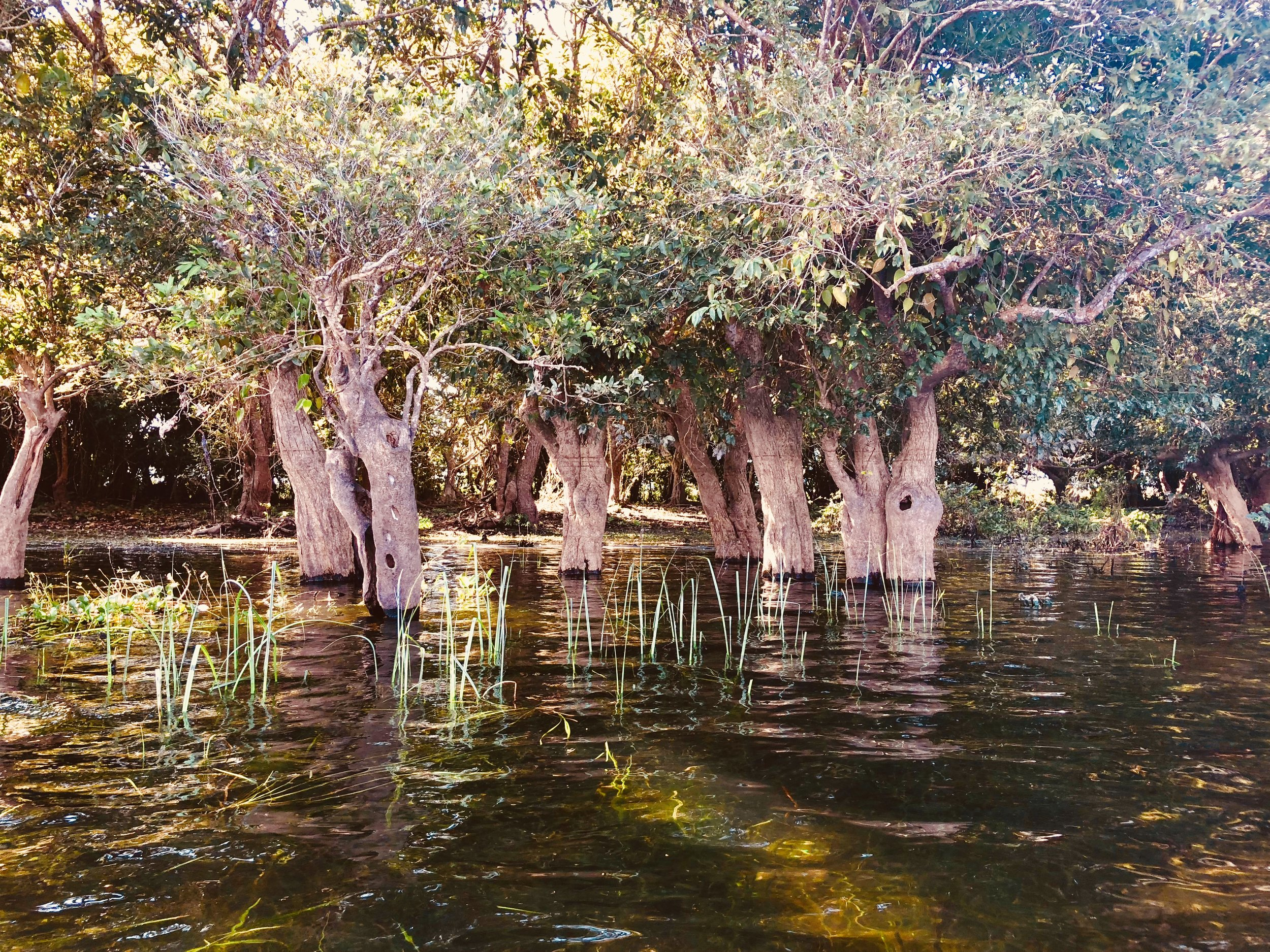 Flooded forest at the lake's perimeters