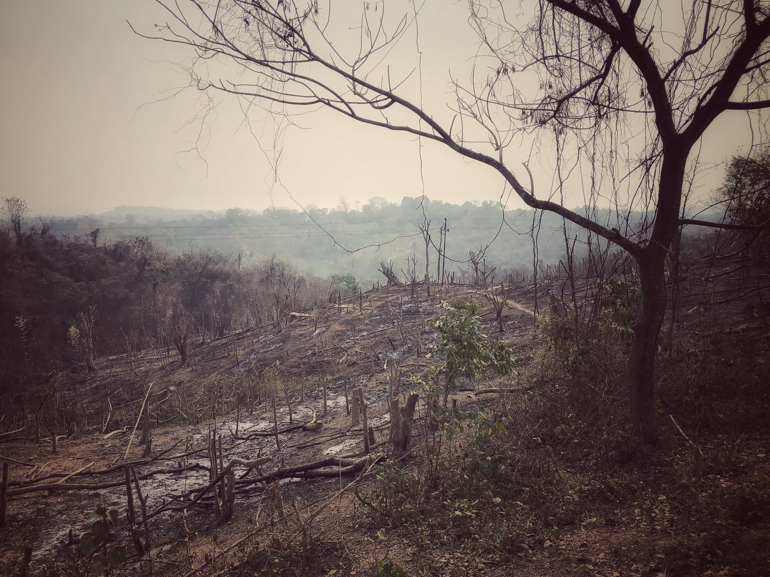 Jhumming (slash-and-burn) farming is highly destructive to the natural environment