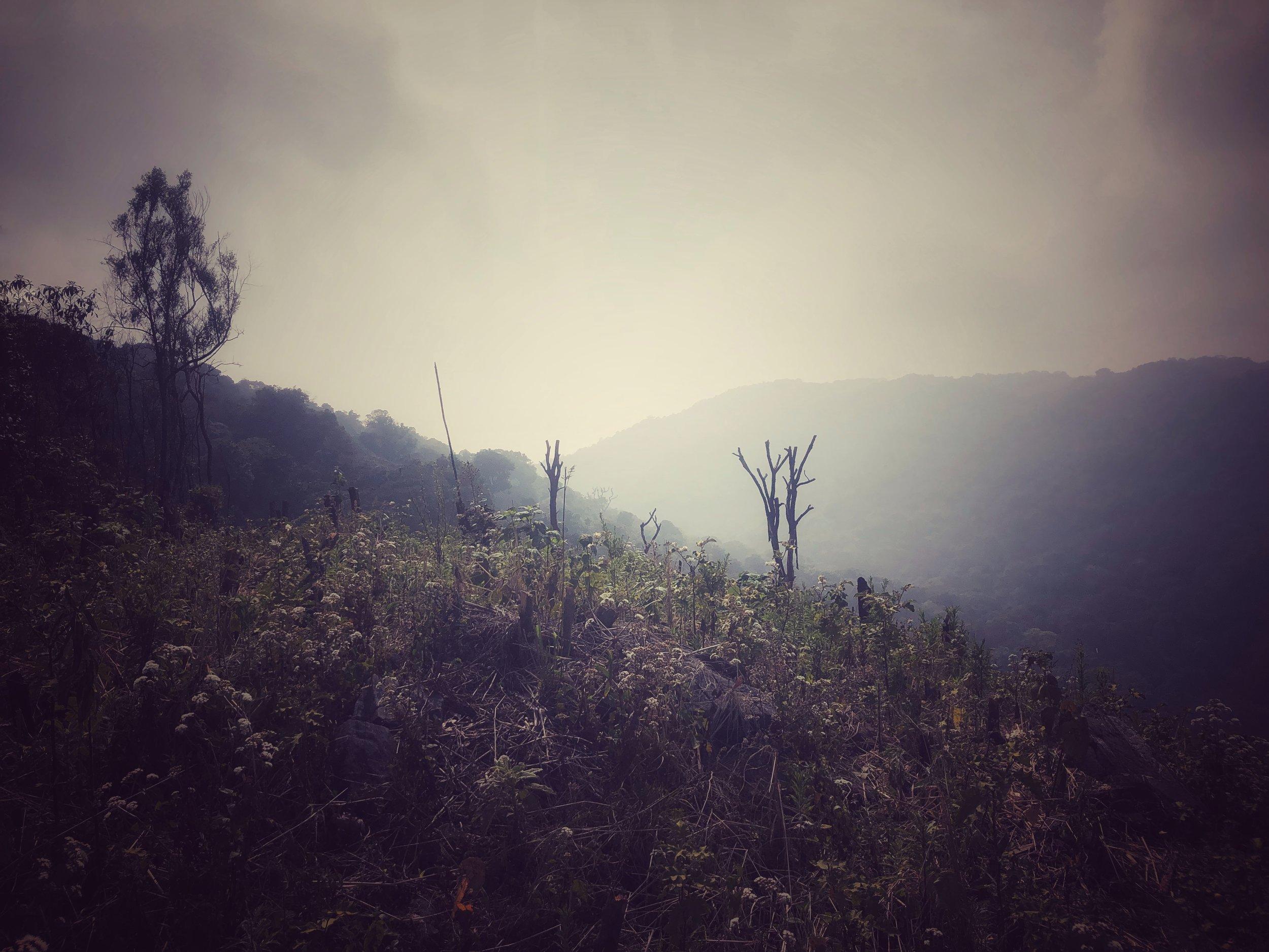 Local reserves jhummed near the park's border