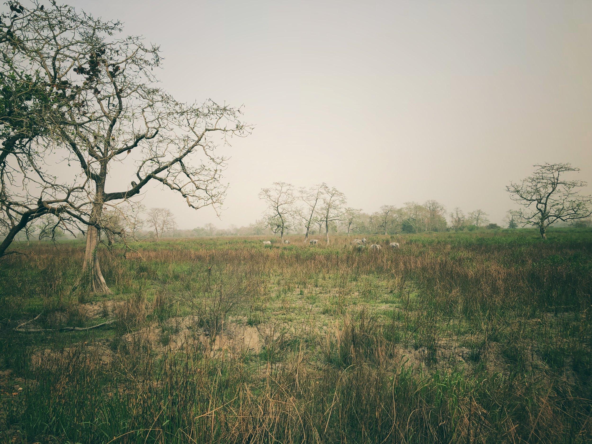 A herd of around 20 (distant) elephants