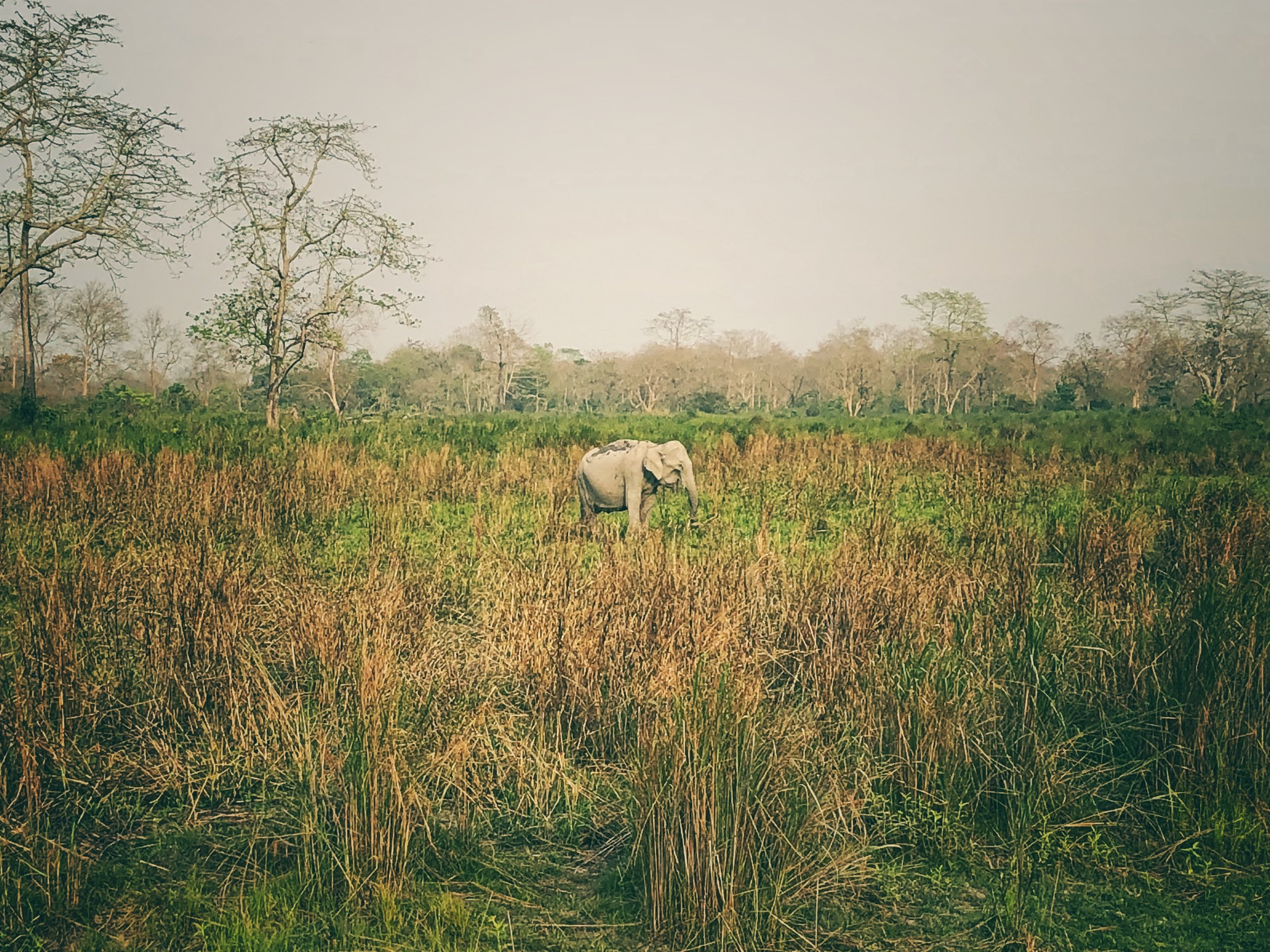 A lone Elephant - my first sighting