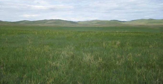 The idyllic vast steppe of Mongolia