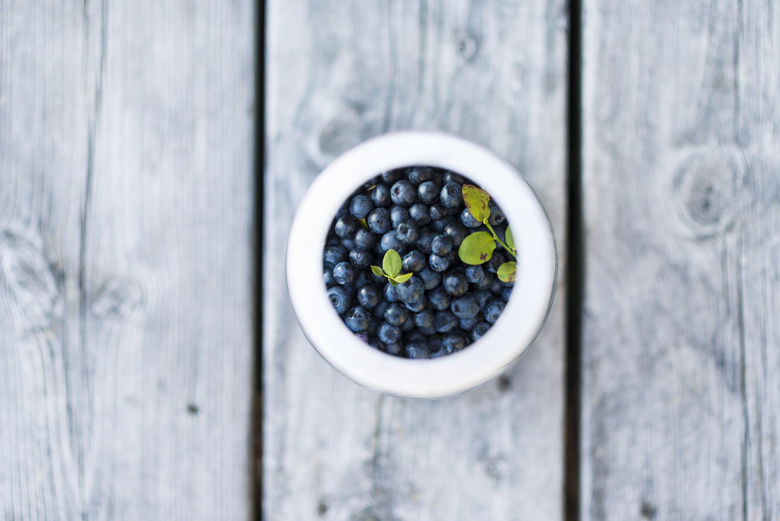 Photo by  Anton Soggiu   Norwegain wild blueberries
