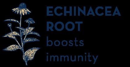 echinacea yellow.png