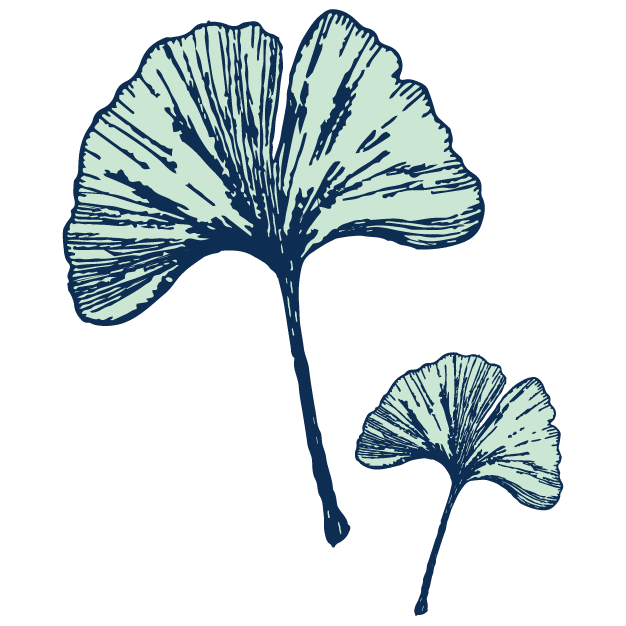 Ginkgo Leaf - Acts as a vasodilator for the circulatory systemIncreases blood flow to brain, enhancing brain functionFound in: Energizing Peppermint, Balance Peppermint, Balance Cinnamon