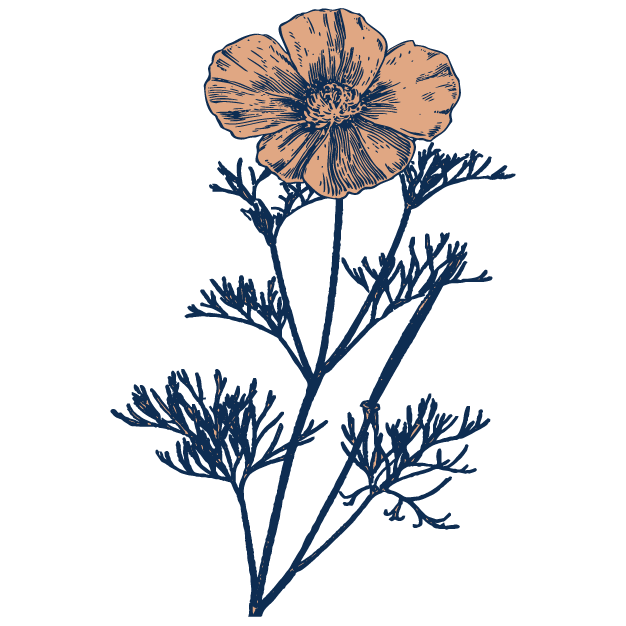 California Poppy - Gentle pain reliever for the head and body Reduces nervous tension and anxietyFound in: Relaxing Cinnamon