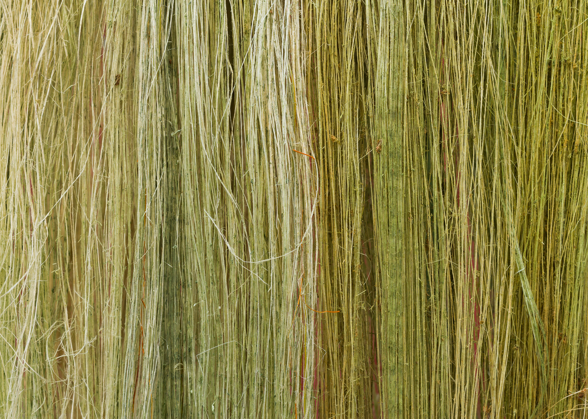 Flax stems.