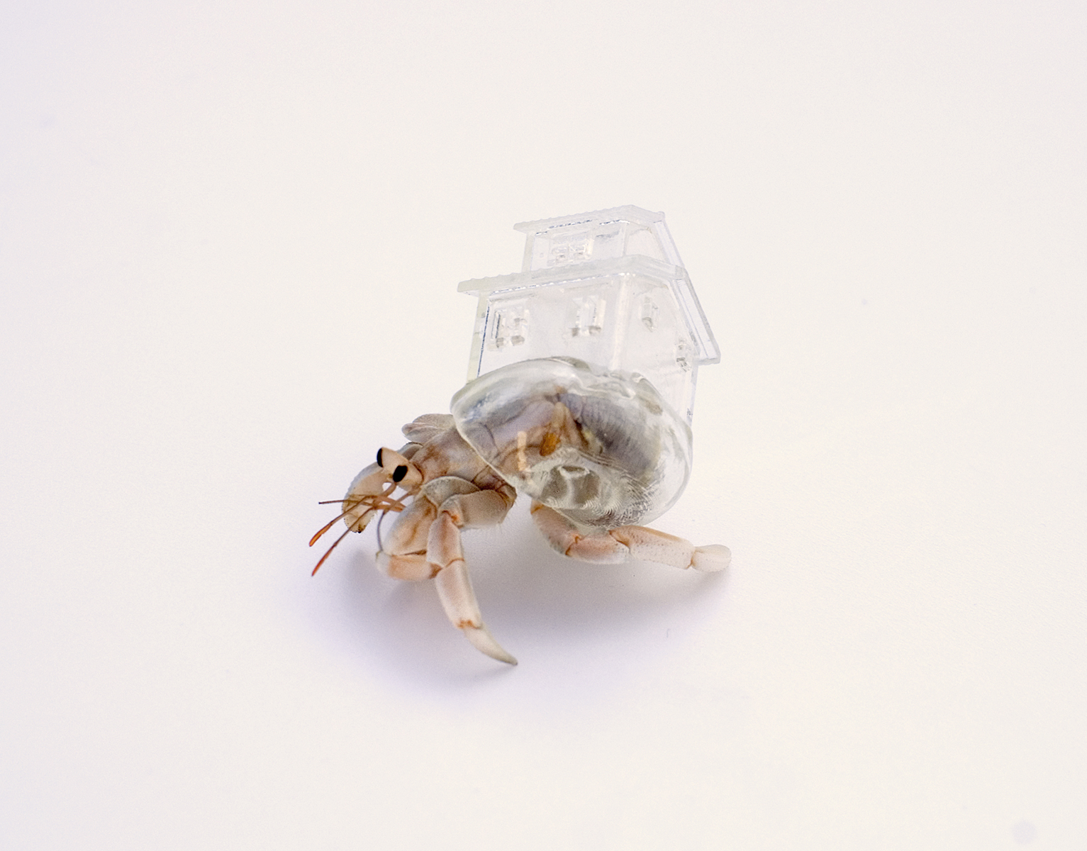 A Japanese artist has created stunning 3D-printed homes for hermit crabs based on architecture from around the world - Lonely Planet Travel News. Article by James Gabriel Martin. Photographs by Aki Inomata