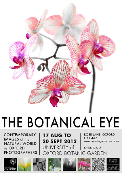 botanical_eye.jpg