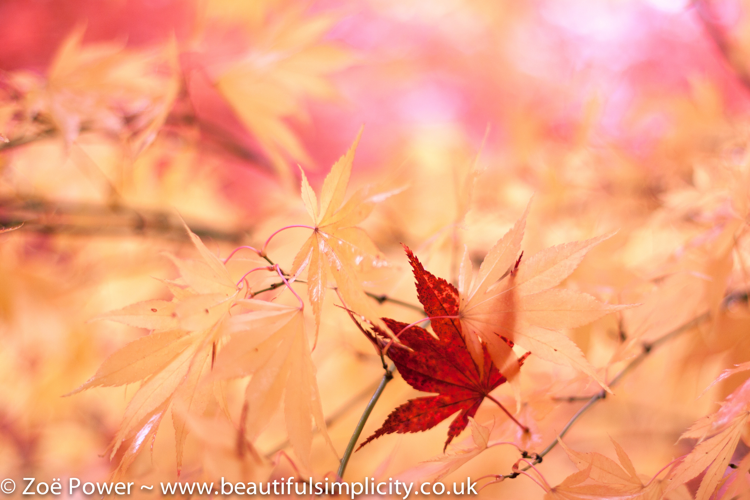 This photo was taken on my Canon 50mm f1.4 lens at f1.4. I was standing very close to the leaf.