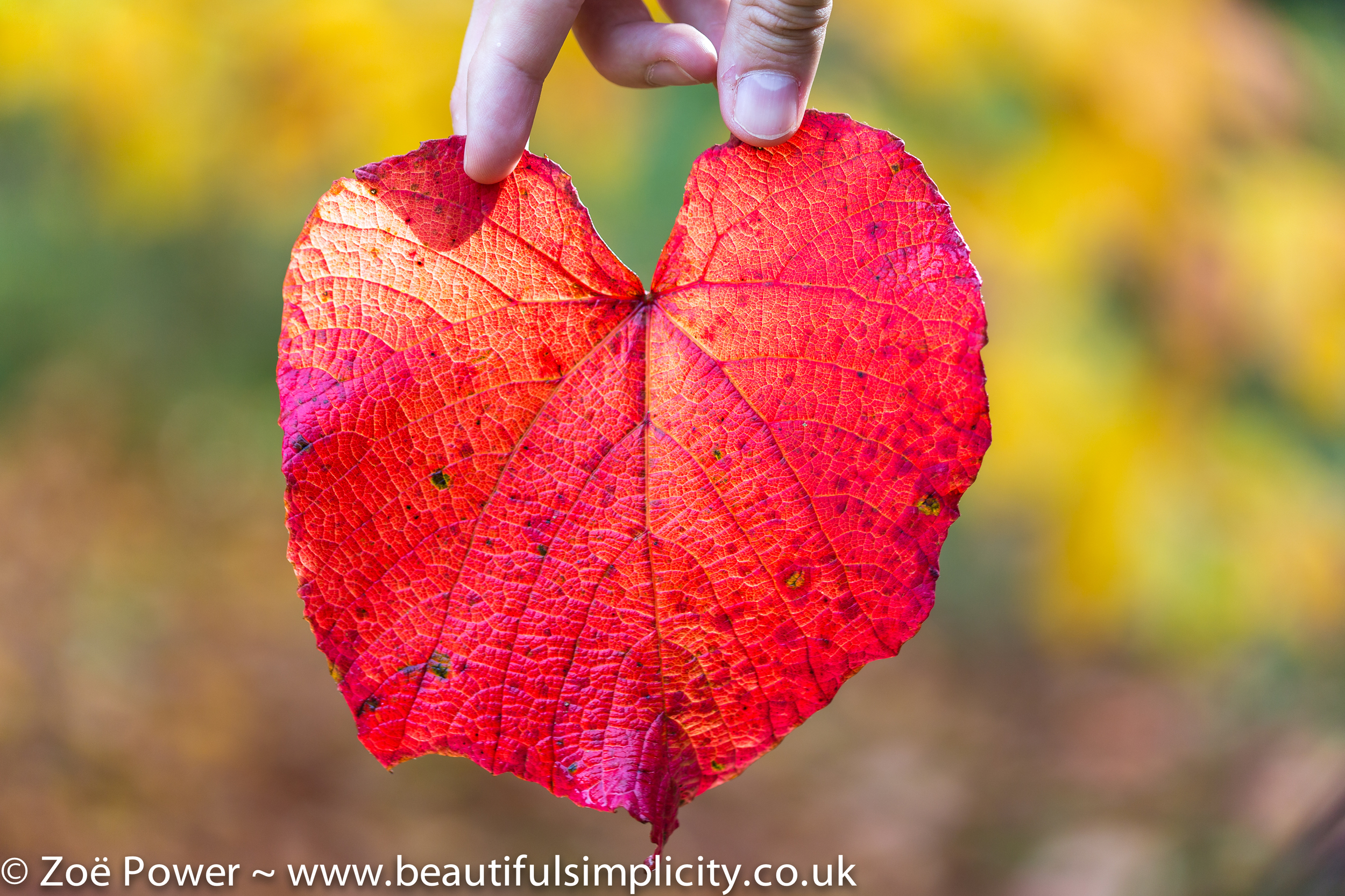 Heart shaped leaf at Courts Garden
