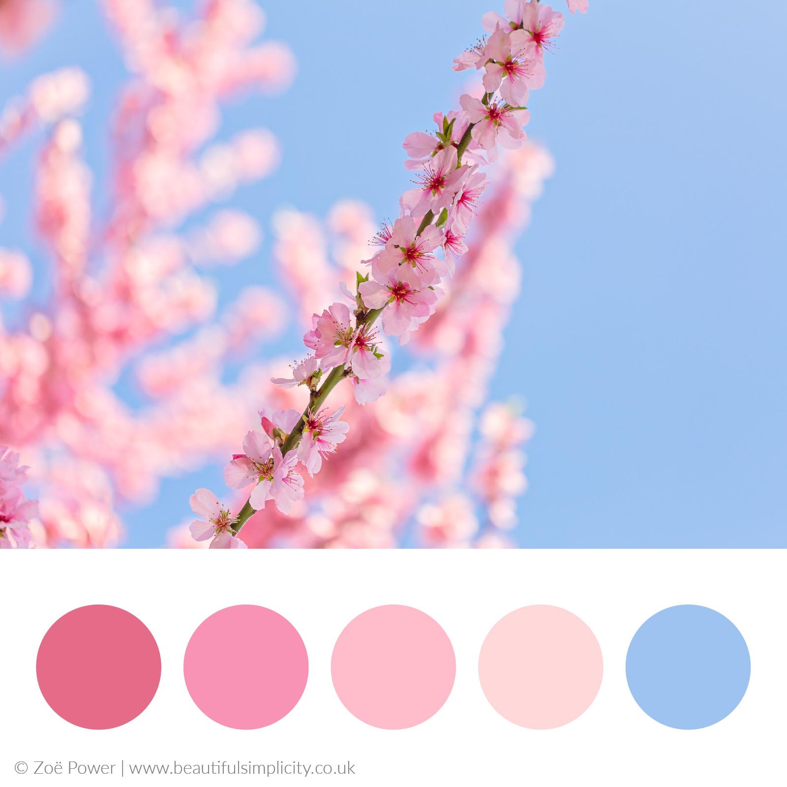 Cherry blossom warm pink colour palette
