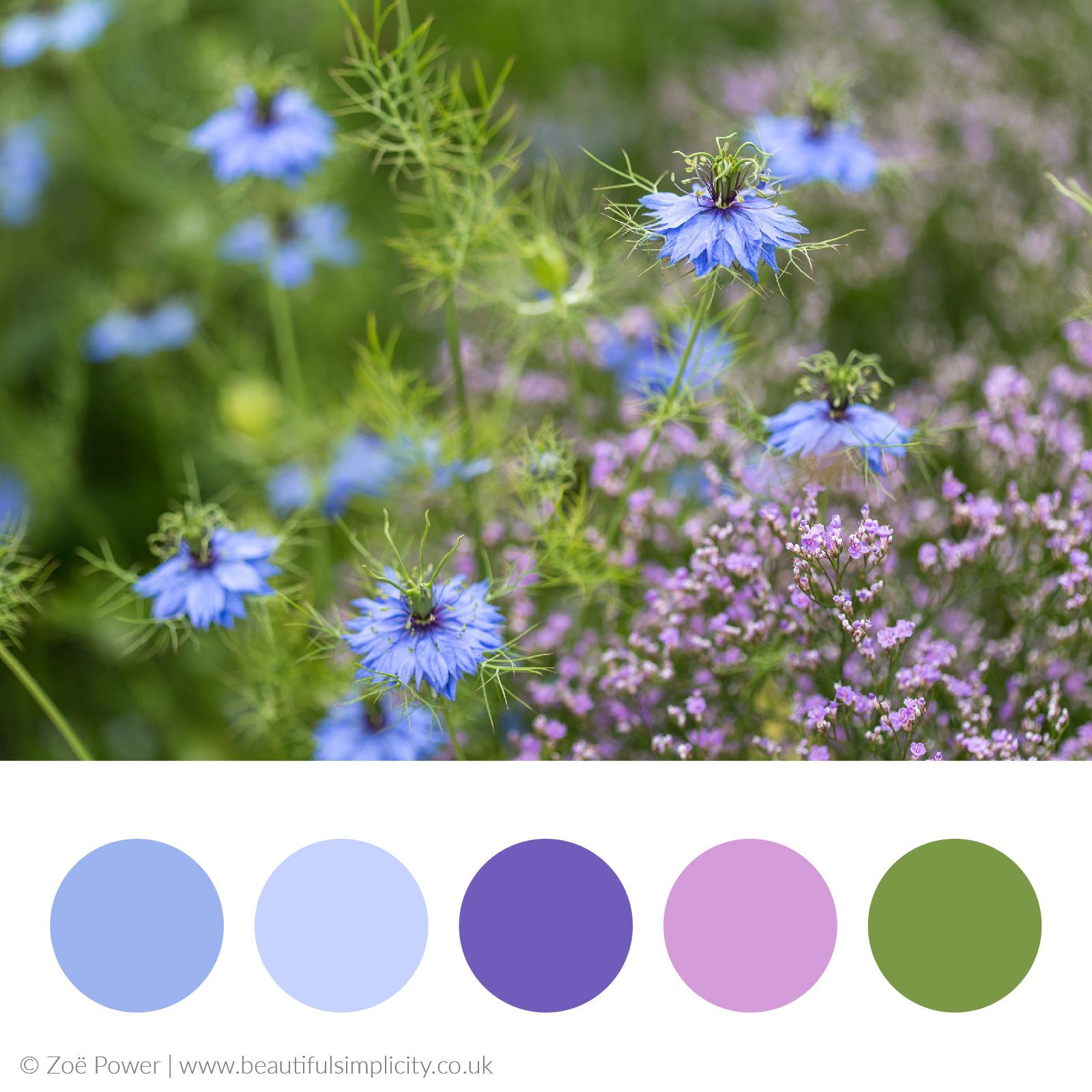 Cornflower blues and purples colour palette   West Dean Gardens, West Sussex, UK