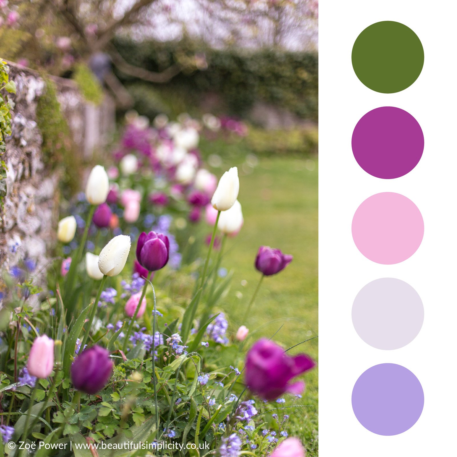 Tulip pinks and purples colour palette   Monk's House, East Sussex, UK