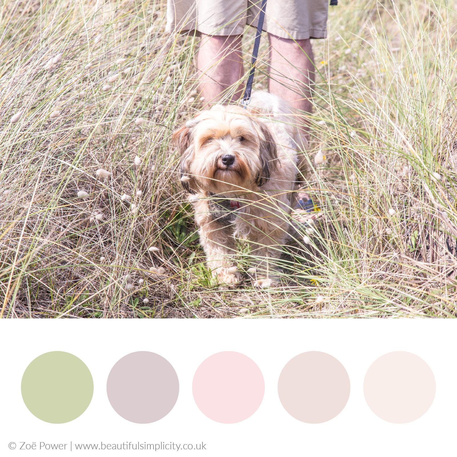 Sand dune neutrals colour palette